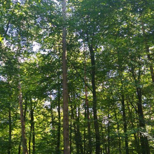 Bäume in Rodenbach